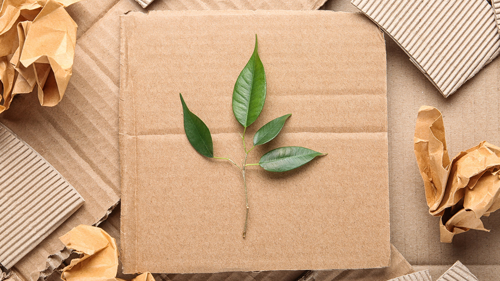 Flat lay composition with pieces of cardboard and green branch